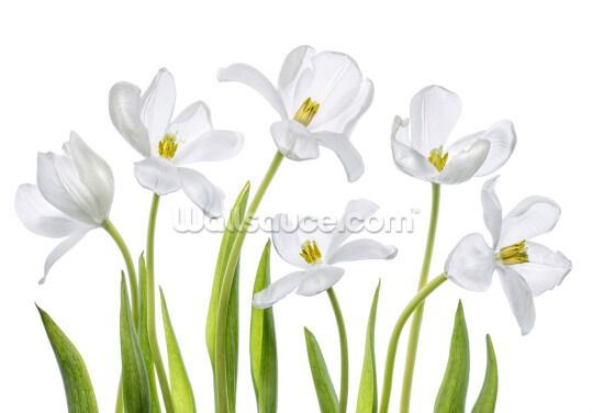 White Tulips Wallpaper Wall Murals