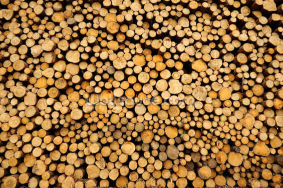 Small Stacked Logs Wallpaper Wall Murals