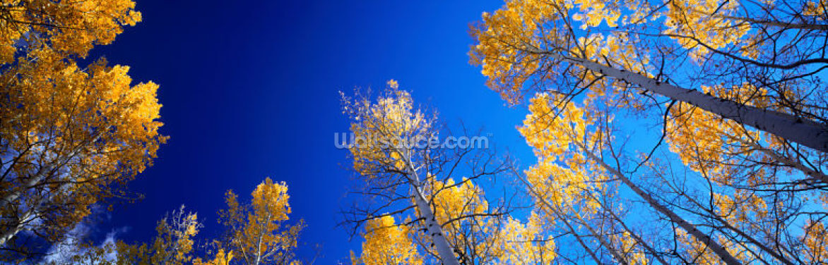 Fall in Colorado Wallpaper Wall Murals