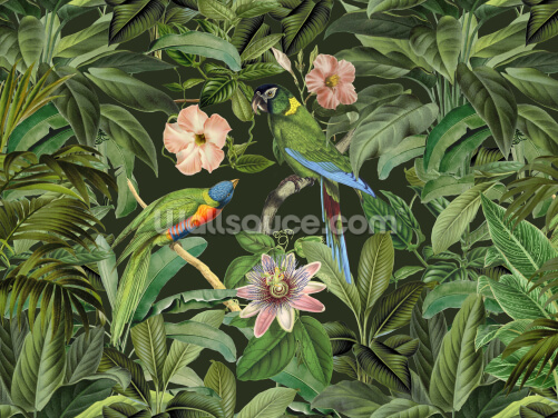 Jungle Parrots Wallpaper Wall Murals