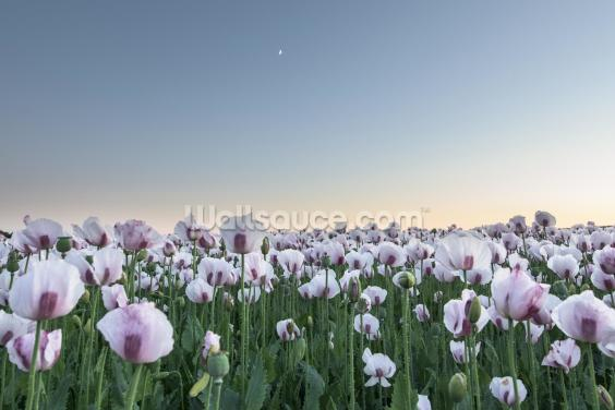 Moonlight Poppies Wallpaper Wall Murals