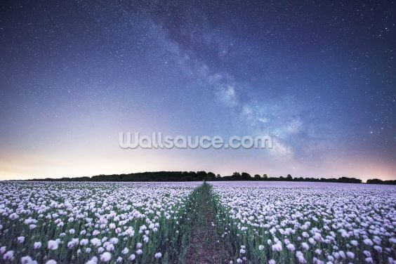 Poppies under the Night Sky Wallpaper Wall Murals