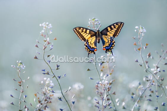 Swallowtail Beauty Wallpaper Wall Murals