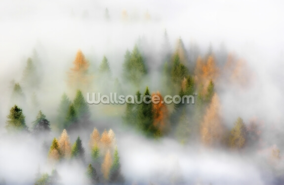 Autumn Dream Wallpaper Wall Murals