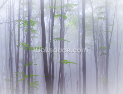 Misty Wallpaper Wall Murals