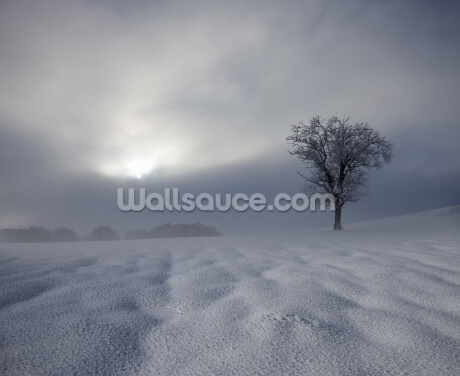 Winter Impression Wallpaper Wall Murals