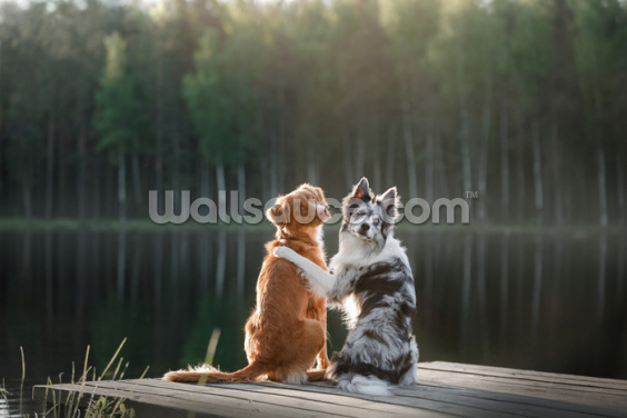 Pawfect Friends Wallpaper Wall Murals