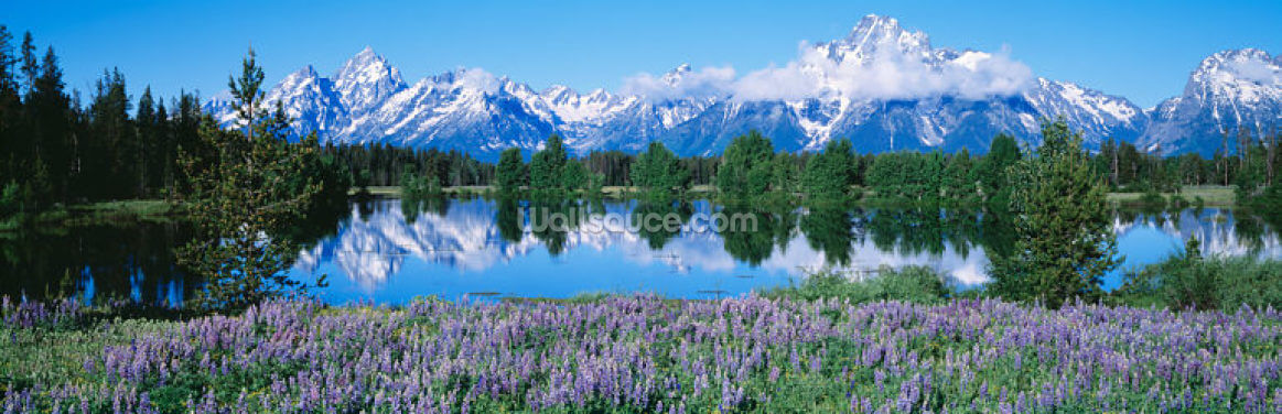 Grand Teton National Park Wallpaper Wall Murals