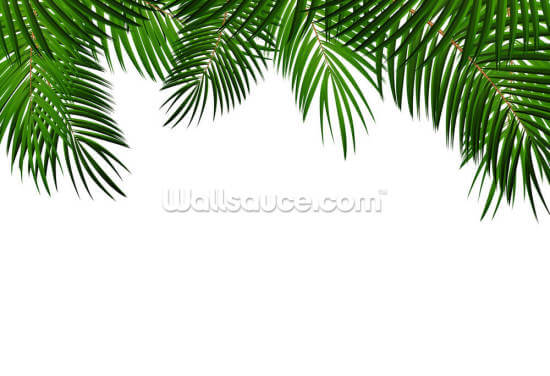 Palm Leaf Frame Wallpaper Wall Murals