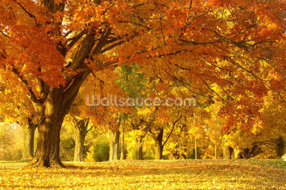 Orange Autumn Scene Wallpaper Wall Murals