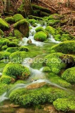 Mountain Stream, Mossy Stones Wallpaper Wall Murals