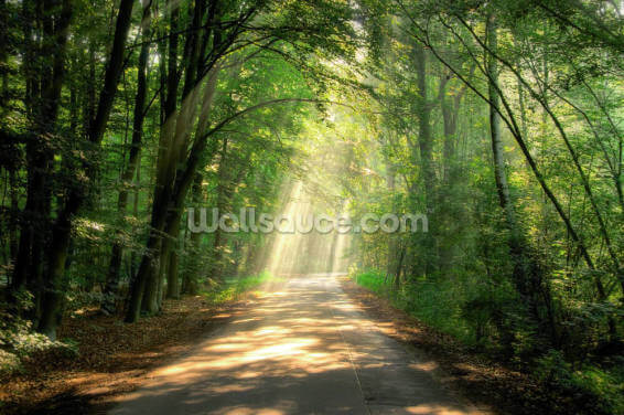 Woodland Sunlit Track Wallpaper Wall Murals
