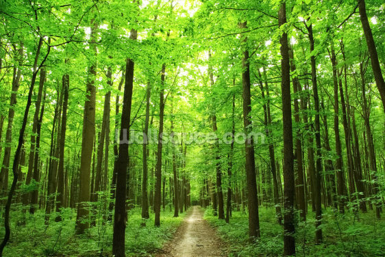 Green Forest Wallpaper Wall Murals