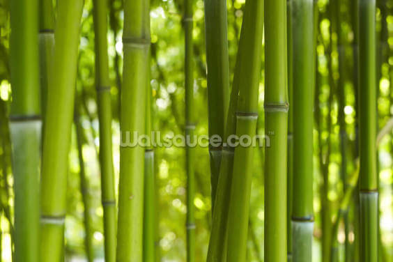 Bamboo Trees Wallpaper Wall Murals