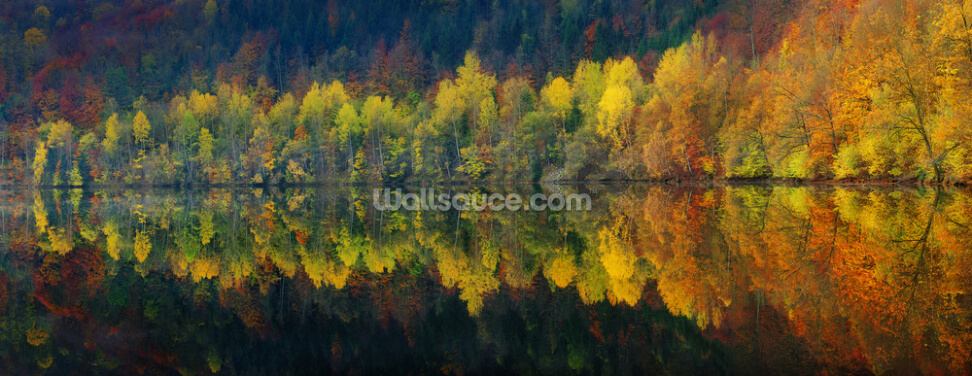 Autumnal Silence Wallpaper Wall Murals