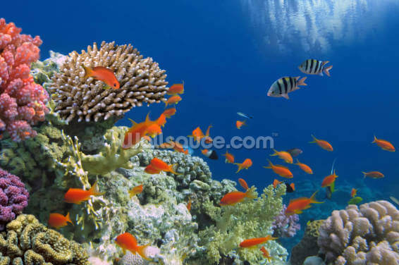 Tropical Fish on Coral Reef Wallpaper Wall Murals