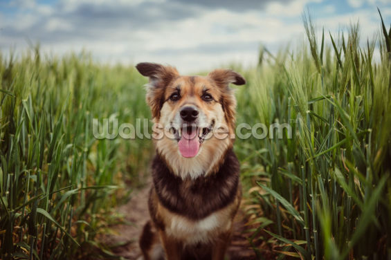 Cornfield Dog Wallpaper Wall Murals