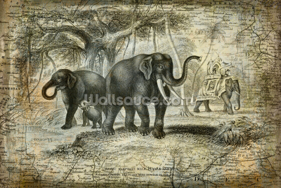 Indian Elephants Wallpaper Wall Murals