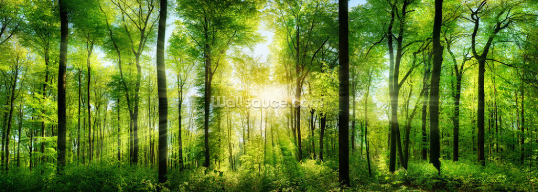 Forest Panoramic with Sunbeams Wallpaper Wall Murals