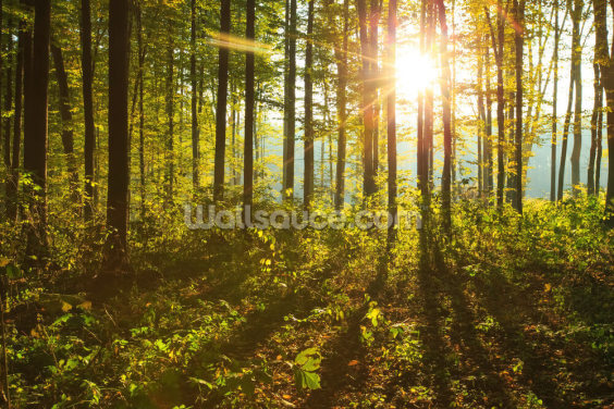 Forest Sunlight Wallpaper Wall Murals