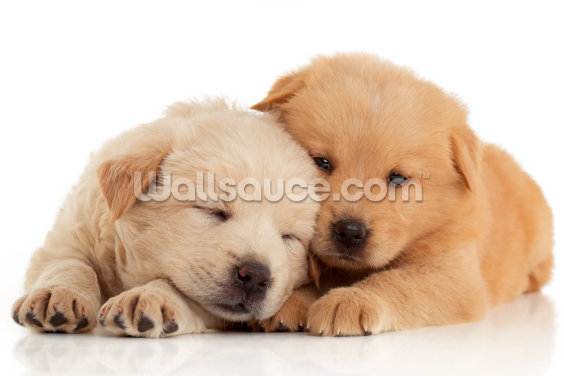 Two Cute Chow-Chow Puppies Wallpaper Wall Murals