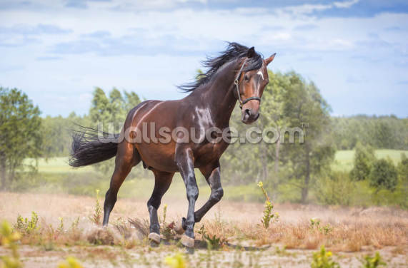Beautiful Horse in Motion Wallpaper Wall Murals