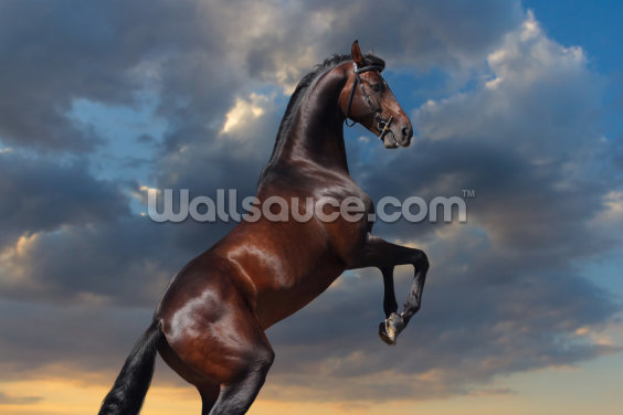Rearing Bay Horse and Sky Wallpaper Wall Murals