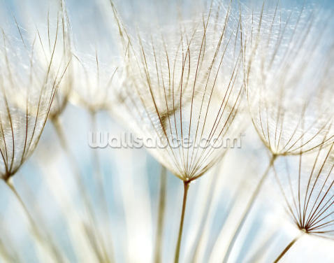 Abstract Dandelion Flower Wallpaper Wall Murals