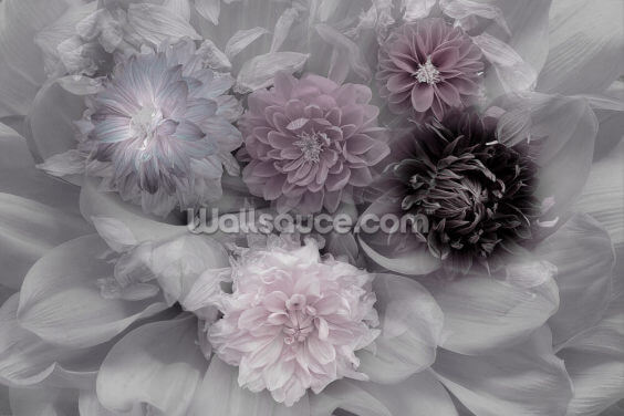 Dahlia Dream Wallpaper Wall Murals