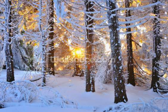 Snow Covered Trees Wallpaper Wall Murals