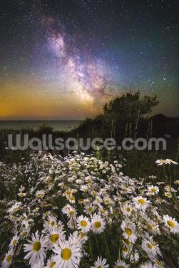 Daisies Under a Starlit Sky Wallpaper Wall Murals
