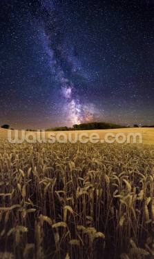 Fields of Gold Wallpaper Wall Murals