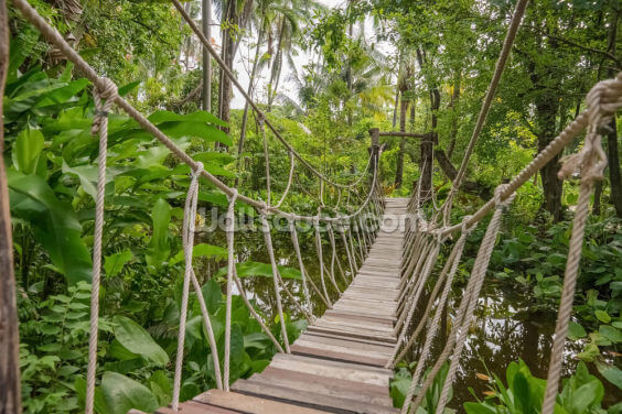 Jungle Bridge Wallpaper Wall Murals