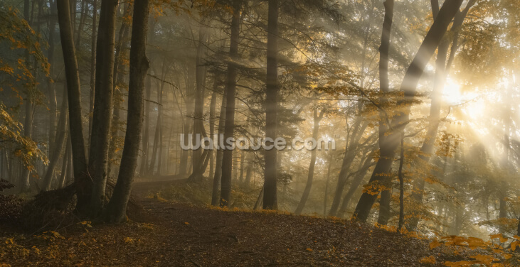 Forest Light Wallpaper Wall Murals