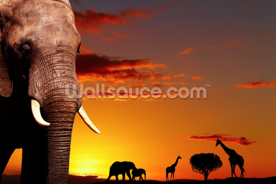 African Safari Wallpaper Wall Murals