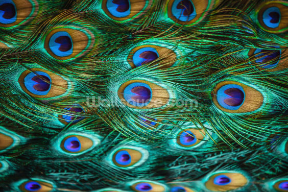 Peacock Eyes Print Wallpaper Wall Murals
