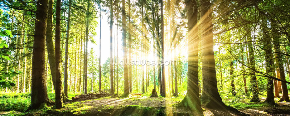 Forest Sun Wallpaper Wall Murals