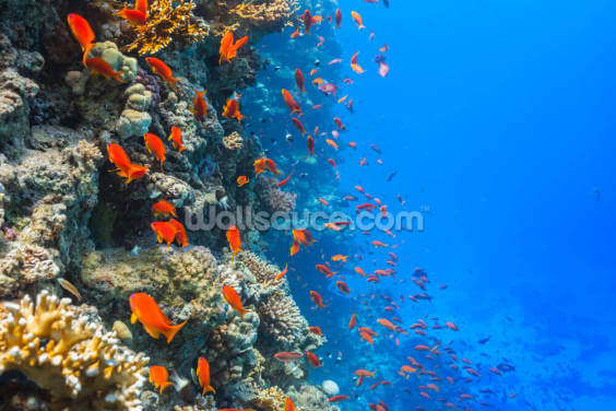 Coral Reef Society Wallpaper Wall Murals