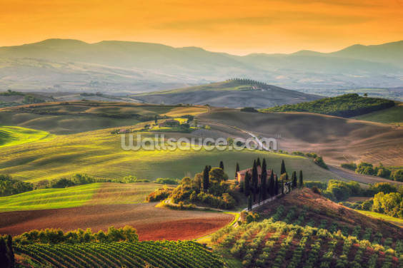 Golden Skies in Tuscany Wallpaper Wall Murals