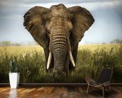 Elephant wallpaper mural kitchen preview