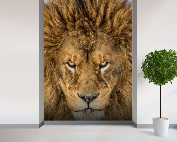 Serious Lion wall mural room setting