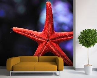 Red Star Fish wall mural
