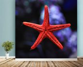 Red Star Fish wall mural in-room view
