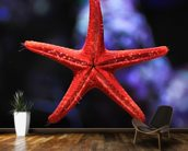 Red Star Fish wall mural kitchen preview