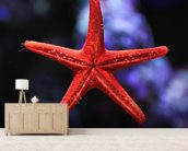 Red Star Fish wall mural living room preview