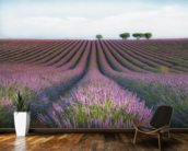 Velvet Lavender mural wallpaper kitchen preview