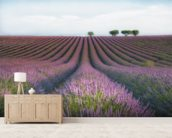 Velvet Lavender mural wallpaper living room preview