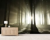 Light and Dark Forest wallpaper mural living room preview
