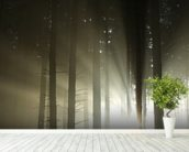 Light and Dark Forest wallpaper mural in-room view