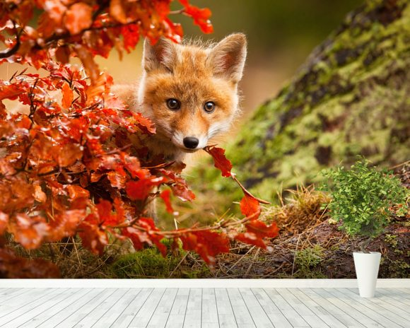 Fox mural wallpaper room setting